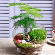 微景观玻璃瓶创意盆栽