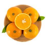 新人专享:冰糖橙5斤