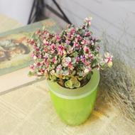 办公桌面绿植+懒人水培盆