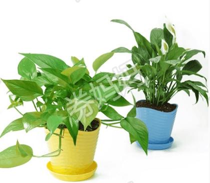 芦荟绿植盆栽