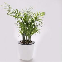 天宇室内装饰带盆盆栽