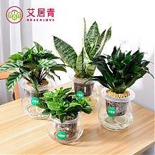 艾居青室内花卉水盆植物
